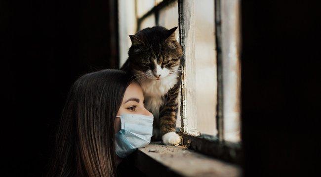Házi kedvencek nem fertőzik meg az embert koronavírussal