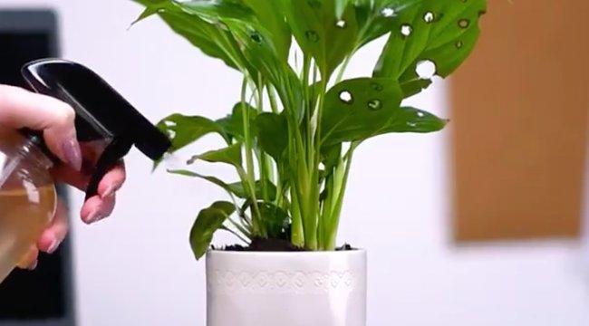Csípős paprika védi a növényeket