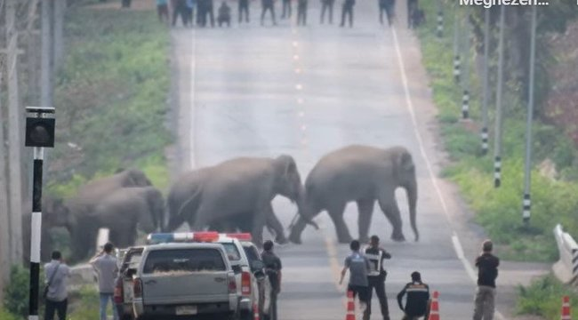Sikerült lefilmezni egy hatalmas elefántcsorda vonulását – videó
