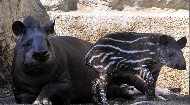Bezárt az állatkert, de az állatok járvány idején is éhesek