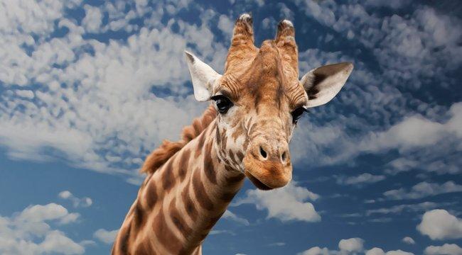 Szafariparkkal menti meg állatait a cirkusz