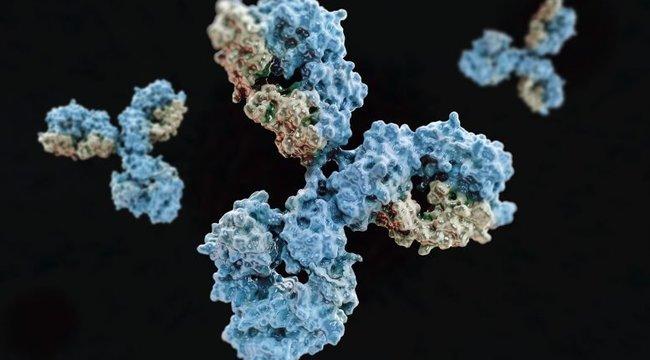 Áttörés: felfedeztek egy antitestet, ami megbénítja a koronavírust
