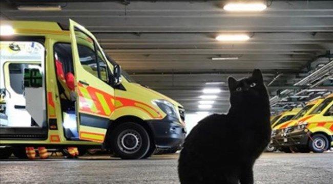 Egy fekete macska a fővárosi életmentők védelmezője