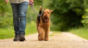 A Bors utánajárt:Még az erdőben is pórázon kell vinni a kutyát
