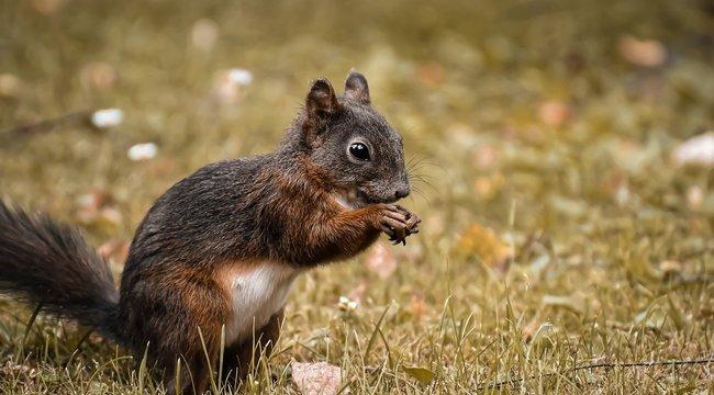 Napi cuki: már fogócskáznak a mókusok a Népligetben - videó