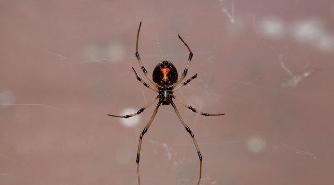 A három testvér Pókember akart lenni, ezért megcsípették magukat egy fekete özveggyel