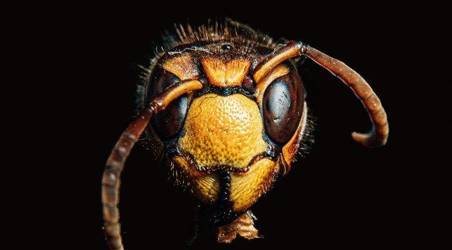 Gyilkos rovar: belehalt az állat harapásába egy 73 éves nyugdíjas