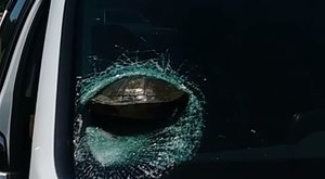 Hogy mi? Pokoli erővel csapódott egy teknős egy autó szélvédőjébe