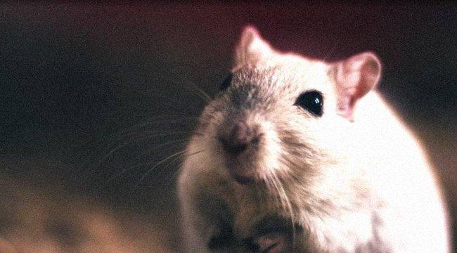 Horror: patkányok ették a Down-szindrómás kislány holttestét – 18+