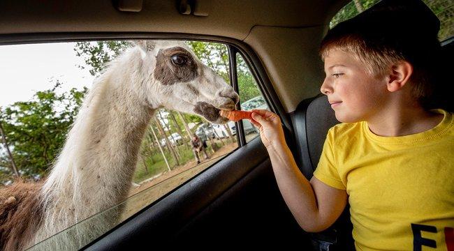 Szadán jártunk – Etetni és simogatni is lehet a szafaripark állatait – videó