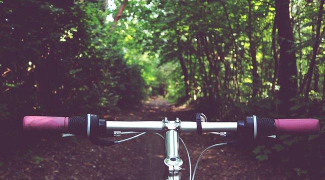 Terepjáróval kellett kimenteni a solymári erdőből a megsérült biciklist