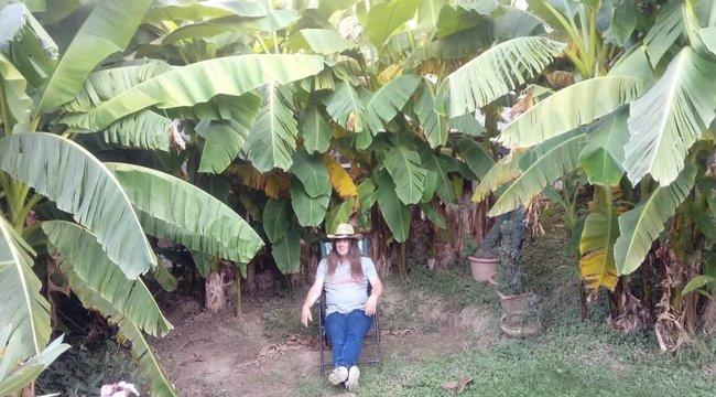 Kaposvári ültetvény –150 banánfa virágzik Attila kertjében