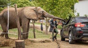 Szétnyalják a kocsikat a szafari park lakói