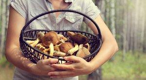 Ehetőés mérgezőhasonmások:A krumplira emlékeztet a gyilkos galóca szaga
