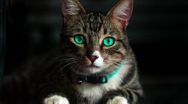 Jó hírünk van a koronavírustól rettegő macskaallergiásoknak