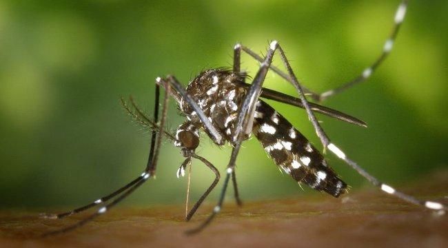 Idén jobban kell aggódnunk a szúnyoginvázió miatt?