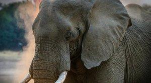 Ritka elefántikrek születhettek egy Srí Lanka-i nemzeti parkban – fotó