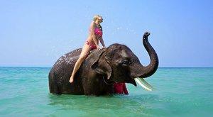 Mi történik? Öt afrikai elefánt fürdik a Balatonnál – élő videó