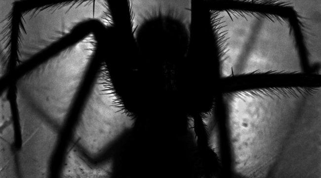 Nem találja ki, mit rejtett a bolti banán: a világ legmérgesebb pókját!