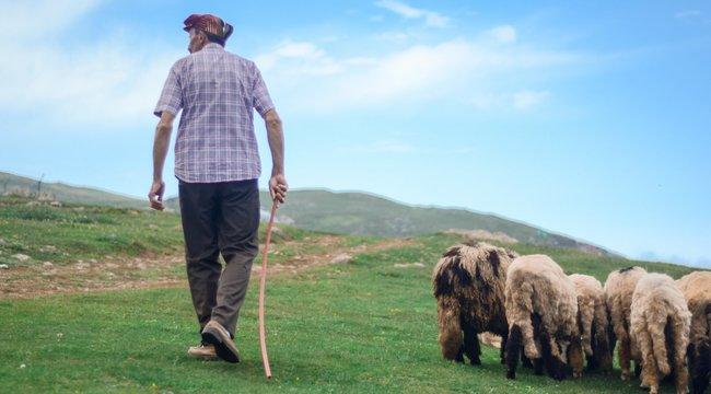 Brutális: 650 forintért verték halálra pásztorbotjával a tinik az ózdi csordást