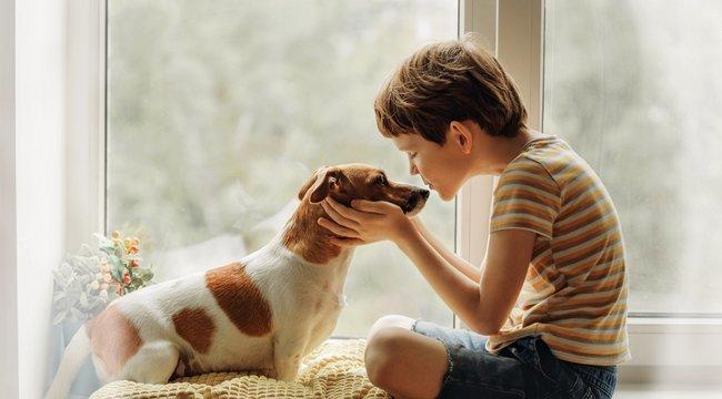 Városi legenda: A kutyák tíz évvel ezelőtti dolgokra is emlékeznek