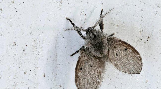 Vigyázat! Életveszélyes szúnyogok fenyegetik a Horvátországban nyaralókat