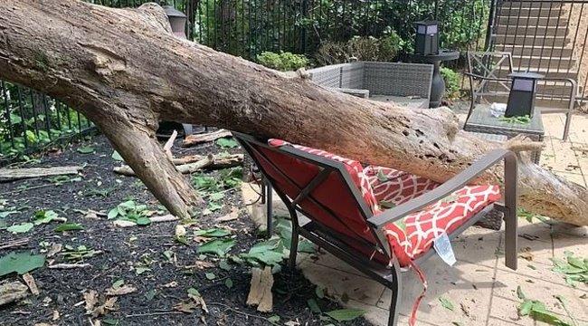 Kis híján agyonütötte a kidőlt fa a napozó anyukát – videó
