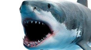 Szörnyű! Egy hatalmas cápa ragadta ki a csónakból a 10 éves fiút