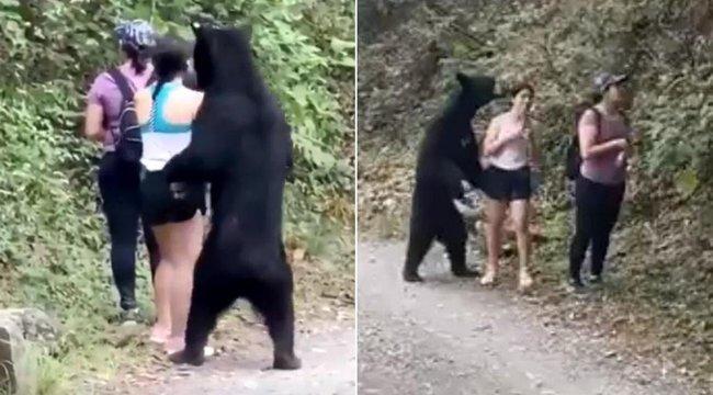 Elképesztő videó: végigszimatolta a túrázó lányokat a medve, majd tovább cammogott