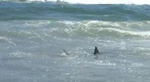 Videóra vették, ahogy a szolgálaton kívüli rendőr megment egy kisfiút a vérszomjas cápától