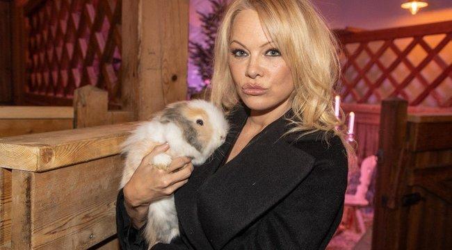Még arcpajzsban is elképesztően dögös Pamela Anderson - fotó