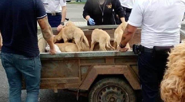 Egy kecskét és öt kutyát zárt zsákokba a budapesti állatkínzó - videó