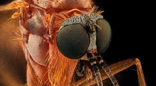 Csípik a szúnyogok a sötét színű ruhákat