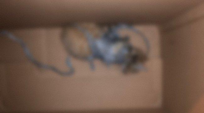 Sokkoló képek: még az állatvédőket is felkavarta, amit ez a szegény kiscica átélt – 18+ fotók