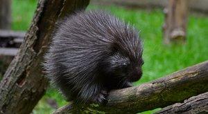 Különleges állatok a vidéki állatkertekben –Világszerte várakoznak a magyar kúszósülre