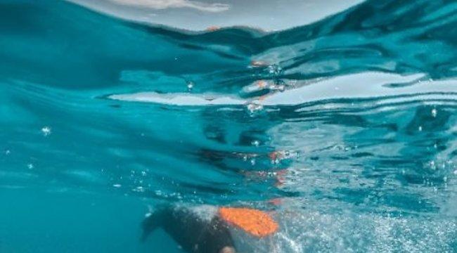 Apró sérülései bizonyították: mérgező halak végeztek vele