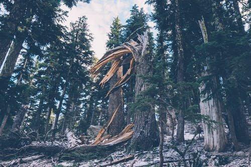 Soha nem múló fájdalom: szélviharban kidőlt fa végzett egy nyolcéves kislánnyal