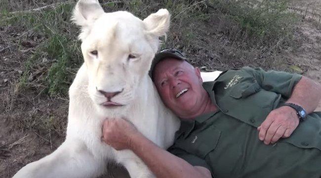 Döbbenet: felesége szeme láttára marták halálra az oroszlánok a gondozót