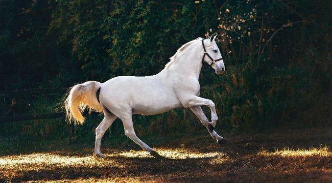 Brutális képen mutatta meg a nő, hogy szinte felismerhetetlenné zúzta az arcát egy ló– fotó