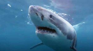 Horror: kamerák előtt tépte szét a szörföst a nagy fehér cápa