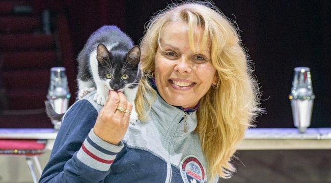 Menhelyi élet helyett cirkuszban lépnek fel Fatime cicái