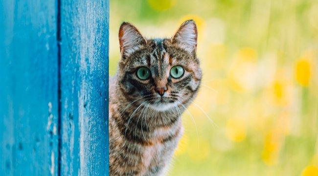 Két hónapra konténerben ragadt a cica– hihetetlen, hogy élte túl