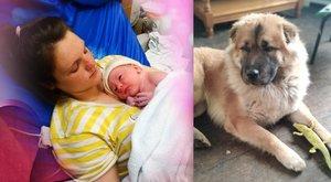 Szívszorító fotó: napokkal korábban még így feküdt édesanyja karjaiban az újszülött kisfiú, akit egy kutya marcangolt halálra