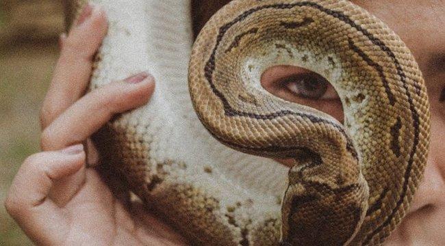 Megőrült?! Óriáskígyót tekert a nyaka köré egy férfi – azt viselte maszk helyett! videó