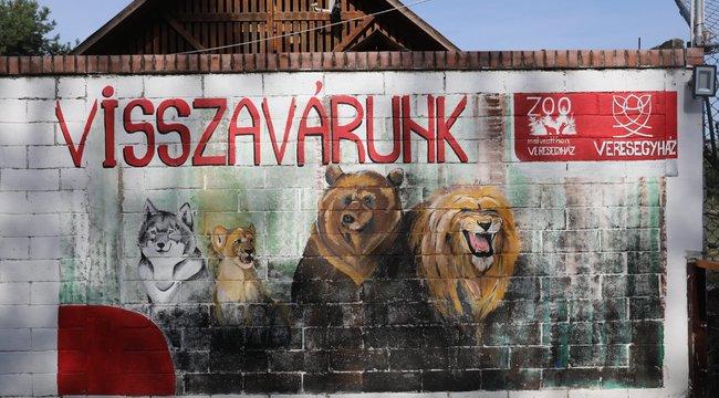 Ki gondozza tovább a veresegyházi medvéket?