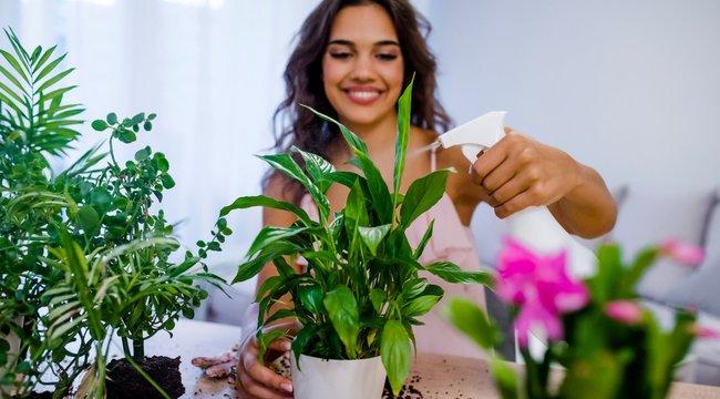 Ideje cselekedni: ebben a sorrendben hordja be a szobanövényeit a balkonról, hogy túléljék a telet