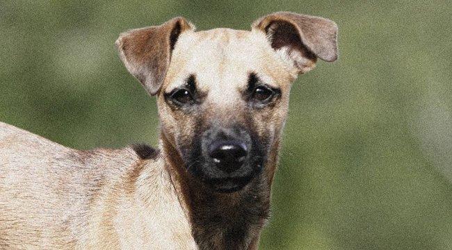 Döbbenet: kényszerítették a nőt, hogy egy kutyával szexeljen