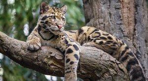 Top7kihaltnak minősített állat a 21. században