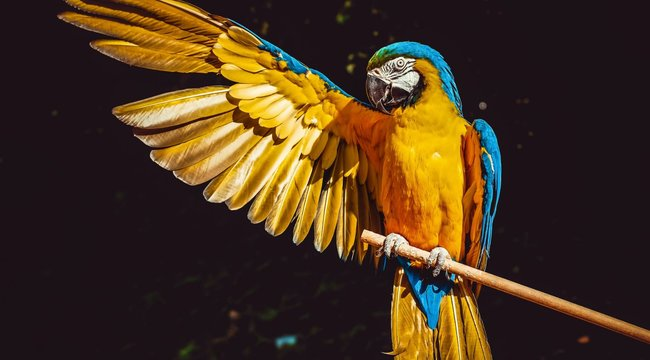 Annyit káromkodtak a pofátlan papagájok, hogy az már a vadaspark látogatóinak is sok volt
