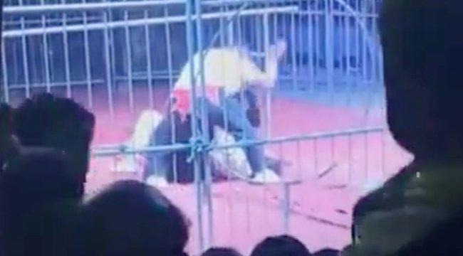 Horror a cirkuszban: Csaknem darabokra tépte a medve az idomárt – videó